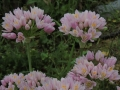 Tavolozza-di-colori-pastello-Amedeo-Schipani