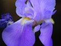 Il volo dell'Iris (Roberto Nevola)