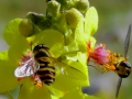 un-fiore-per-uno-L.Zonetti