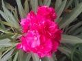 Bouquet-Giuliana-Petrucci