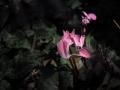 Effimera-speranza-Caterina-Knijn