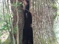 Spettri-nel-bosco-Andrea-Gazzillo
