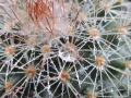 Cristalli-spinosi-L.Zonetti