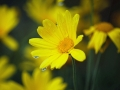 La-signora-in-giallo-R.Nevola