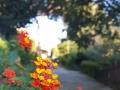 Fiore-di-periferia-R.Nevola