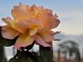 Tramonto-...-rosa...-sulle-Terme-R.Nevola