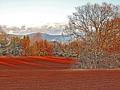 Col-tappeto-rosso-F.-Barberini