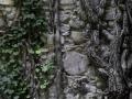 Muro-di-Radici-J.-Cartwright