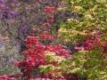 Tavolozza-di-colori-R.-Nevola