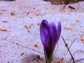 Ultima-neve-di-primavera-L.-Zonetti