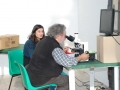 14-Il-microscopio