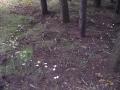 Cerchio-magico-nel-bosco-Arnold-Knijn
