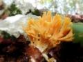 Manina su letto di foglie (Luciano Zonetti)