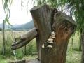 Funghi-allabbeveratoio-II-N.Cimpanelli