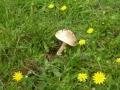 Fungo-tra-fiori-S.Trovato
