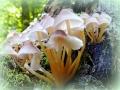 Piccole-meduse-L.Zonetti