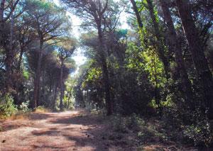 La zona forestale del litorale romano